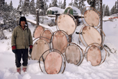 Cree hunter, Abel Brien, with a number of beaver skins stretched onto frames to dry. Quebec, Canada. 1988