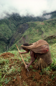 A Yali woman working in her family's garden, in the Seng Valley. Irian Jaya, Indonesia. 1990
