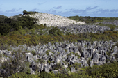 Coral pinnacles in the interior of Nauru. The Pacific.