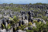 Only coral pinnacles remain in the worked out phosphate fields. Nauru. The Pacific.
