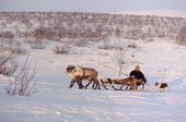 Vassily Selivanov, a Sami  man from Lovozero, driving a reindeer sled. Murmansk, NW Russia. 2005