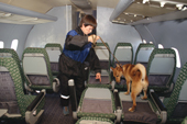 Dog handler, Eleana Batayeva, with Reed, a dog/jackal cross, that is trained to detect explosives at Sheremetyevo Airport, Moscow, Russia. 2005