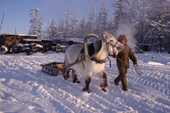 A horse & sleigh being used to collect river ice at a herders' camp at Korban. Yakutia, Siberia, Russia.